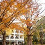 日比谷公園のパワースポット《首かけイチョウ》!東京都内の紅葉シーズンには特に人気!ご利益は?