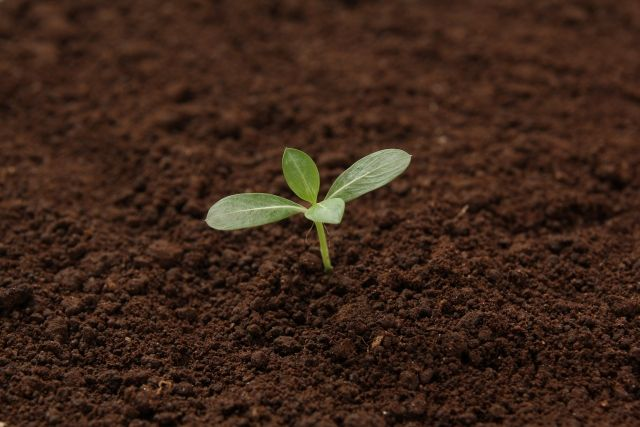 土に埋めて浄化